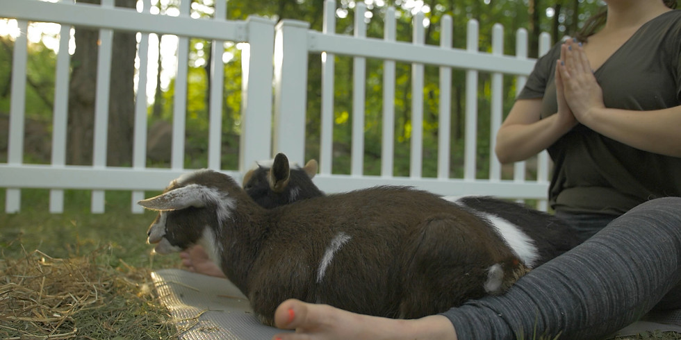 Baby Goat Yoga  - SOLD OUT