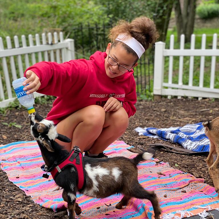 Goat Yoga & Goat Fun!
