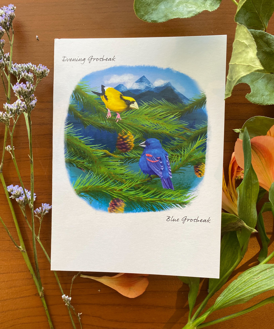 Evening and Blue Grosbeaks