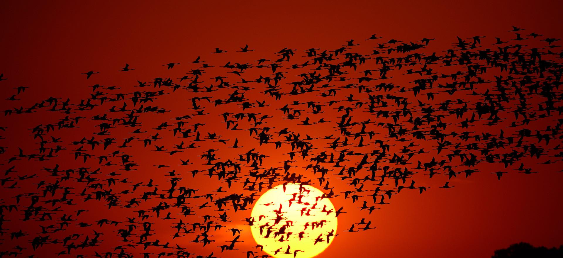 Flamingos, Sèdafrika