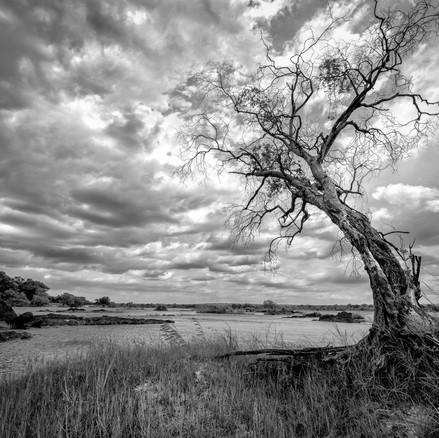 Zambezi NP, Zimbabwe