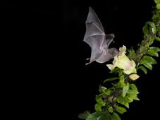 Fledermäuse/bats