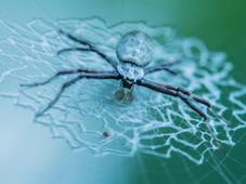 Spinne/spider