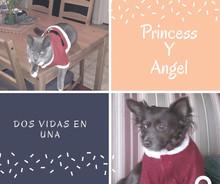 A mi reencuentro con Princess ( Segunda Parte)