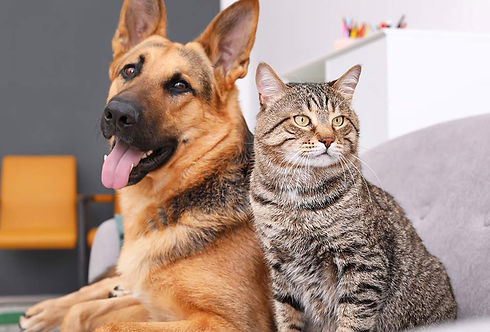 Can-cats-and-dogs-get-coronavirus_resize