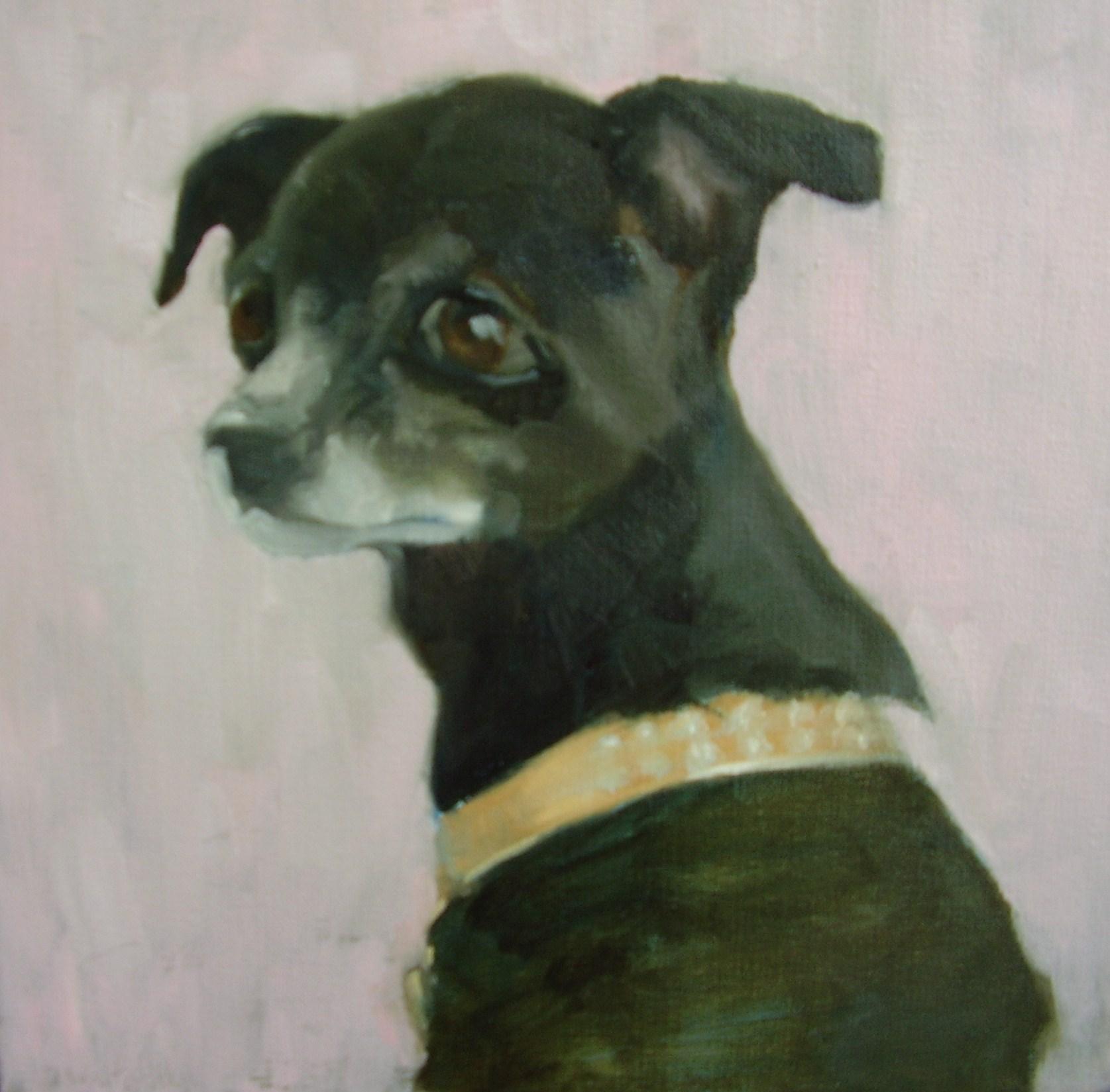 Megan's Chihuahua