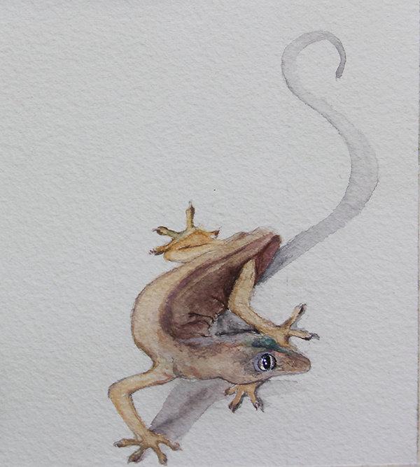 Copy of ghecko 2.jpg
