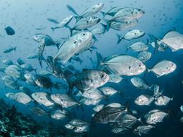 Est-ce que c'est bon de manger du poisson tous les jours ?