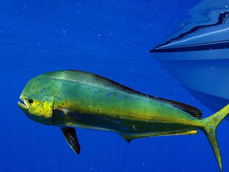 Quels sont les poissons les moins pollués ?