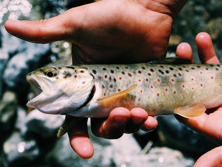 Pourquoi le poisson est bon pour la santé ?