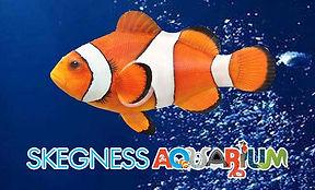 skegness-aquarium-is.jpg