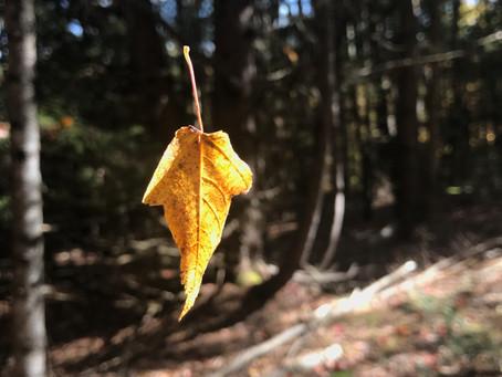A Pause: Leaf II