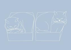 Cat in te box -01