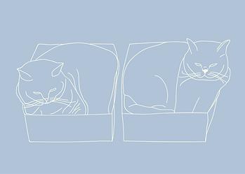 Cat in te box -01.png