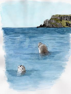 Seals at Sumburgh Head, Shetland