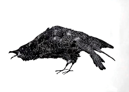 A Crow's Cause