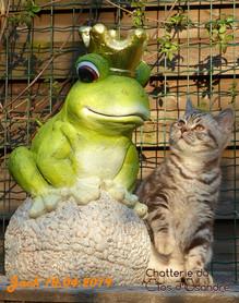 Jack & la grenouille