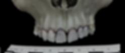 skull_black_cropped.png