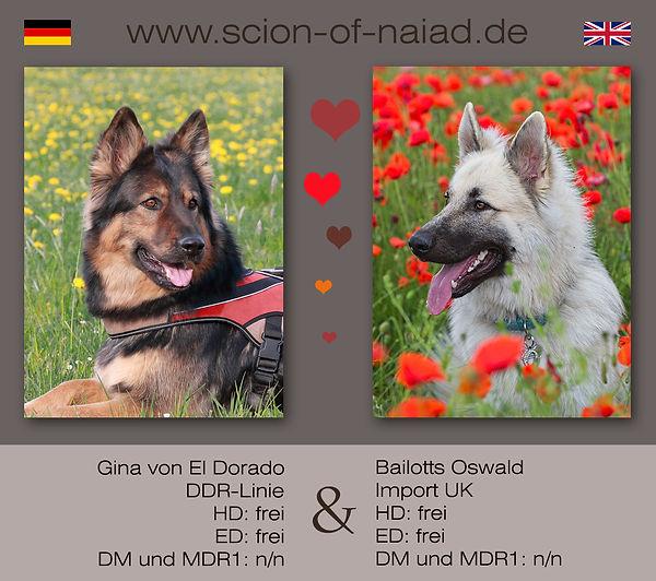 Anzeige Gina und Oswald Kopie.jpg