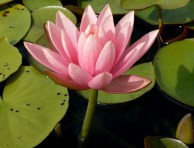 May we live like the lotus, at home in the muddy water…