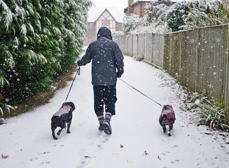 Winter Activity Challenge
