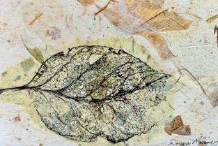 Skeleton Leaf.
