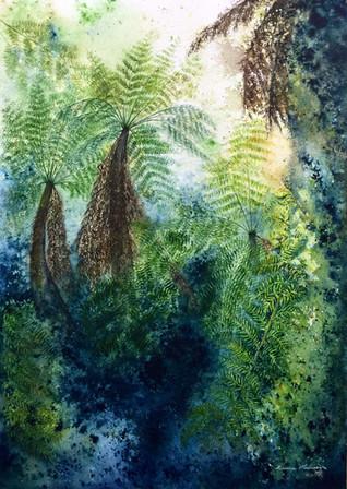 Russel Falls, Tree Ferns.