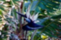 Flower. Donna Maloney.JPG