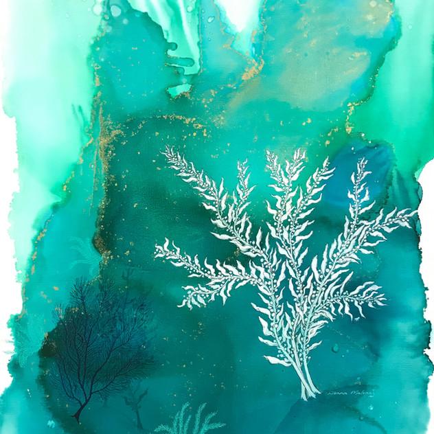 Aqua Waters