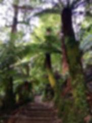 Tree. Donna Maloney.JPG
