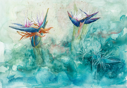 Dance of the Bird of Paradise