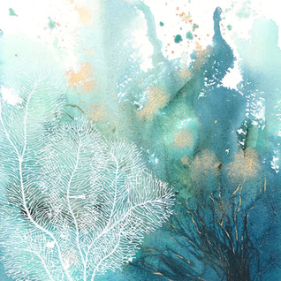 White Coral 4.