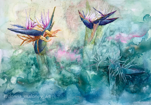 Dance of the Bird of Paradise.