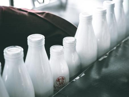 Mitos e verdades sobre o leite: conheça outras fontes de cálcio