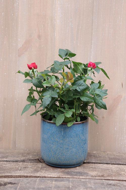 L'Adorable Cache-Pot Gris-bleu