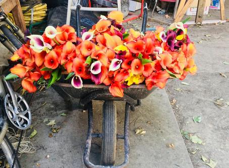 Loin des fleurs, près du coeur : Une pensée particulière pour nos horticulteur.ice.s