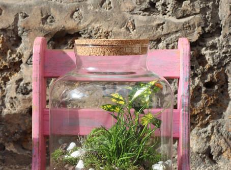 Les terrariums ont la côte !