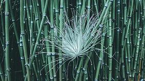 Bamboo BG 5 HD.jpg