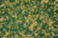 mikael-kristenson-1356.jpg