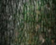 raymond-culbertson-32168.jpg