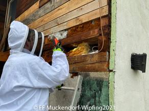 Bienenschwarm am 21.05.2021