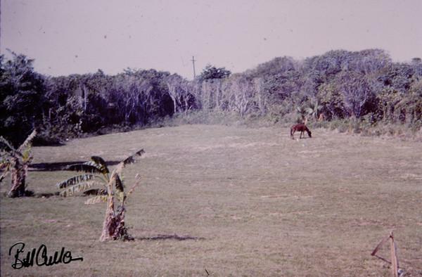 Bahamas March 1965 (6).jpg