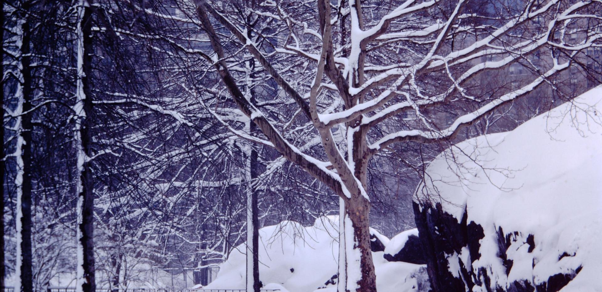 New York January 1965.jpg