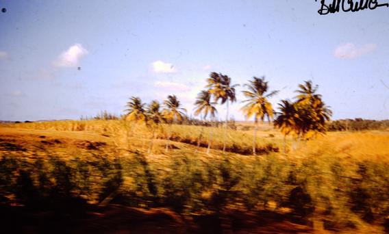 Barbados March 1958 (22) copy.jpg
