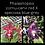 Thumbnail: Phalaenopsis cornu-cervi red X speciosa blue-grey