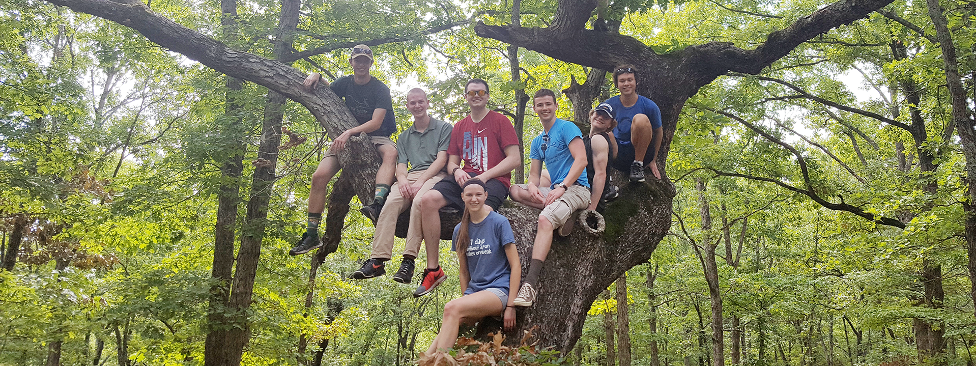 Slideshow - Hiking Tree Group