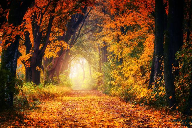 Der Herbst ist da – und der Schimmel leider auch!