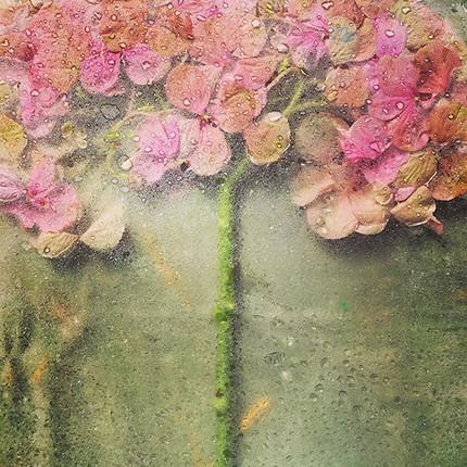 Secret-GardenWEB.jpg