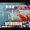 Thumbnail: 有殻刺身甘蝦 3L
