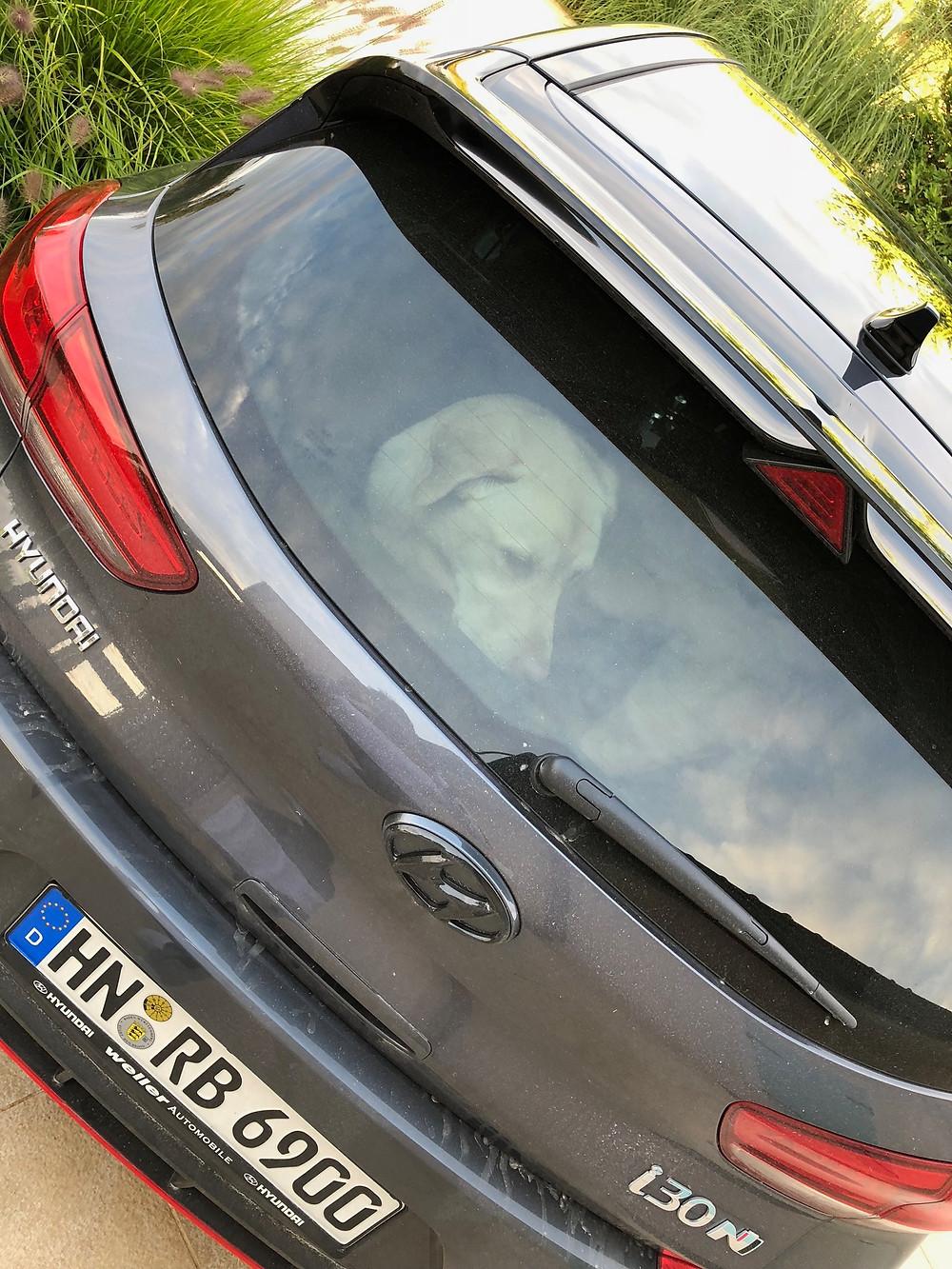 Hier seht ihr Casper (Labrador) im Kofferraum sitzen, passt perfekt!
